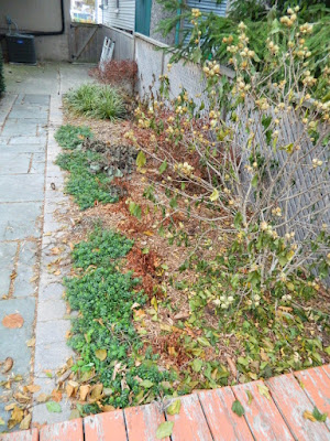 Oakwood Village Toronto Fall Backyard Cleanup before by Paul Jung Gardening Services