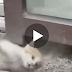 Kitten crying out for people to help through the glass… Now watch when her request is answered!