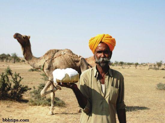 Health Tips of Camel Milk