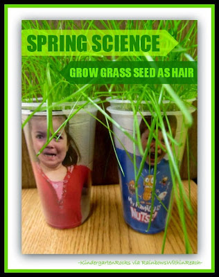 Simple Science for Spring: Grass Seed becomes HAIR! via RainbowsWithinReach