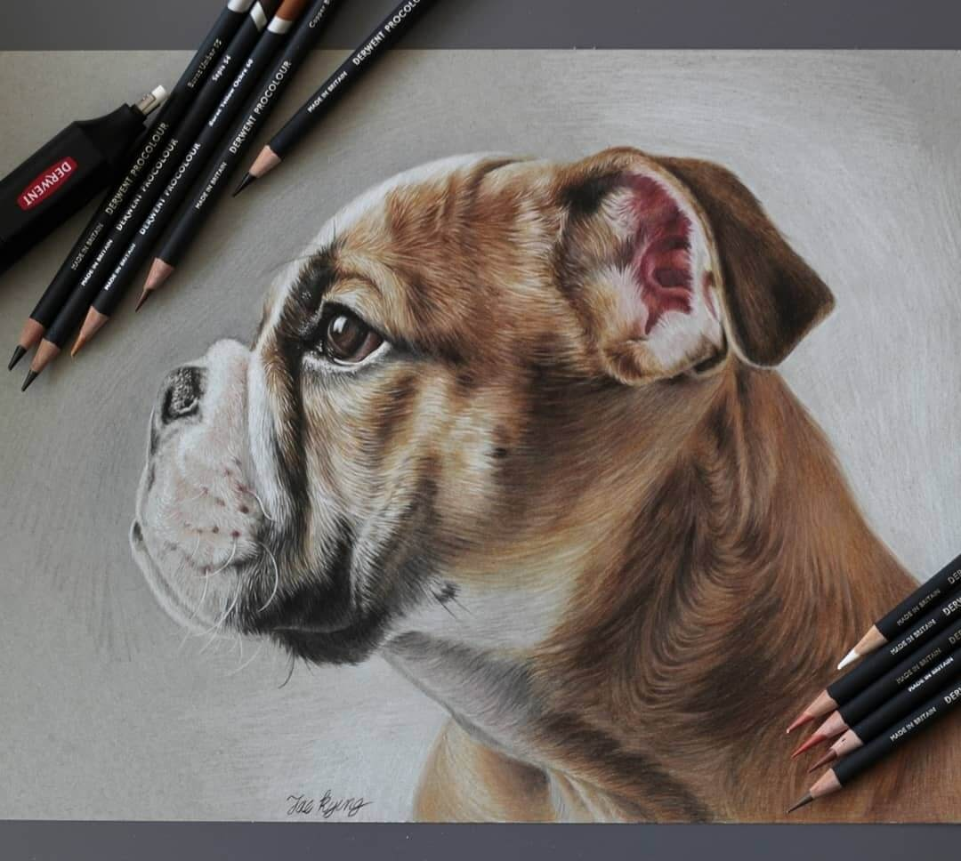 11-British-Bulldog-Jae-Kyung-Domestic-and-Wild-Animals-Pencil-Drawings-www-designstack-co