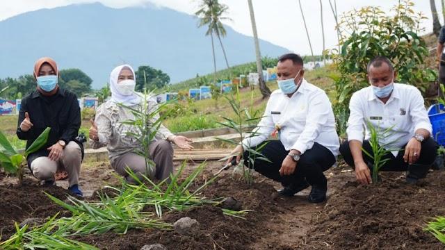 Bupati Tanam 150 Jenis Tanaman Toga Untuk Pengembangan Kebun Edukasi