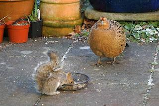 wildlife, birds, pheasants, squirrels,