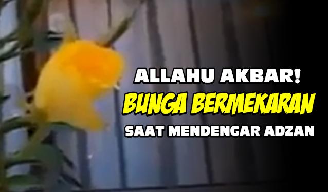 Allahu Akbar, Bunga Bunga Ini Mekar Saat Mendengar Adzan, Lihat Videonya!