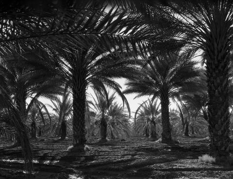 Kisah Rabi'ah bin Kaab dan Abu Bakar
