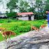 देवघर अखिल भारतीय विद्यार्थी परिषद के प्रकल्प एस० एफ ०डी० के प्रांत प्रमुख व राष्ट्रपति अवॉर्डी राजेंद्र कुमार के द्वारा बेजुबान व बेसहारा जानवरों को भोजन कराया गया