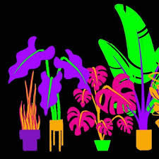 Brightly colored drawing of plants in pots on a black background