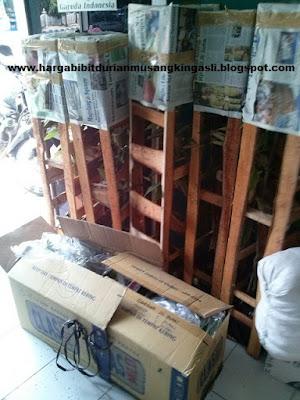 Jual Bibit Durian Musang King Jawa Timur Bpk Faisal 082.137.433.114