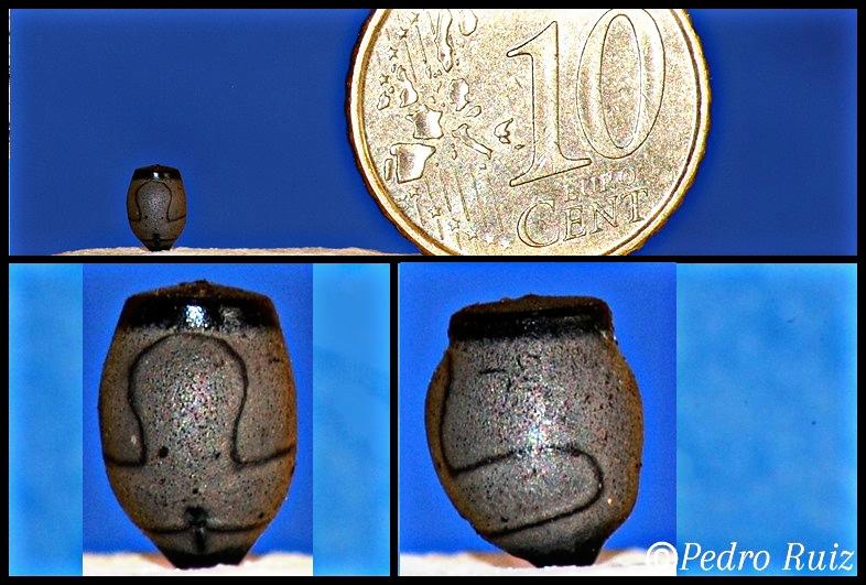 Huevo de Sungaya inexpectata