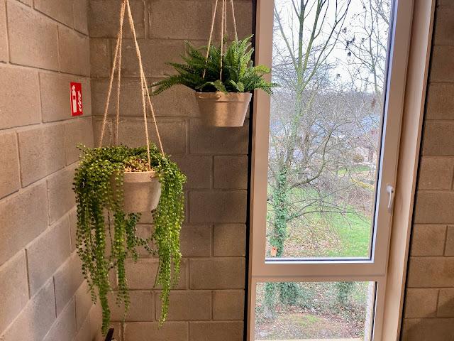 goedkope kunstplanten kopen voor bedrijven of particulier prijzen op aanvraag voor buiten binnen hangend of in pot tegen muur met bloemen op terras in de tuin en tegen wand