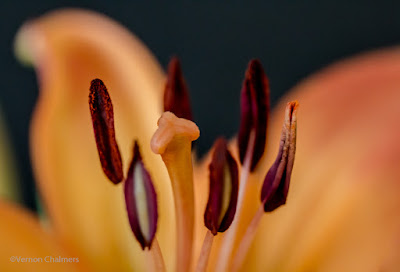 Macro & Close-Up Photography Cape Town Support Group