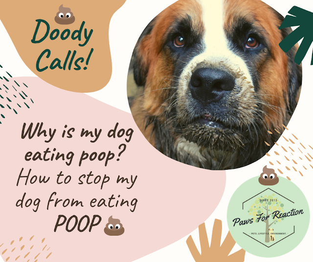 Pet Peeve: Why is my dog eating poop? How to stop my dog from eating poop