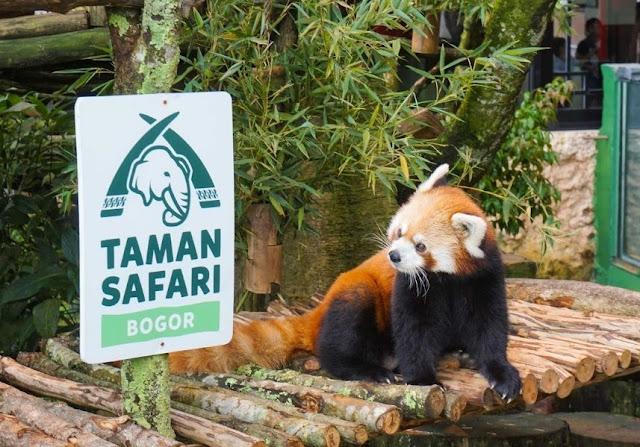 1. Taman Safari Bogor