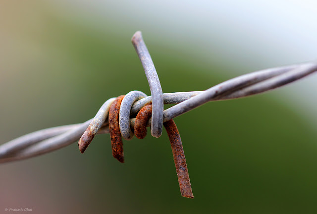 A Macro Photograph of Rusted Barb Wire with Green Blurred Bokeh Background, Shot via Canon 100mm Prime Macro F2.8 L Series Lens.