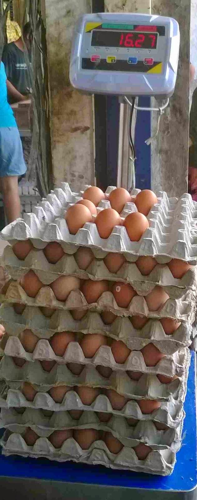 Harga Telur Horn : harga, telur, Telur, Harga, Murah:, Purwakarta, Barat, Sekitarnya., WIJAYA, TELUR