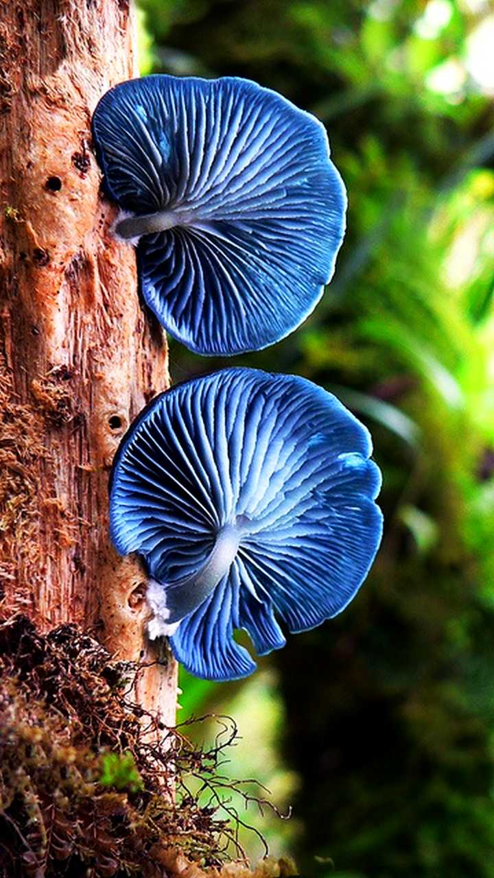 The Nicest Pictures Blue Mushrooms