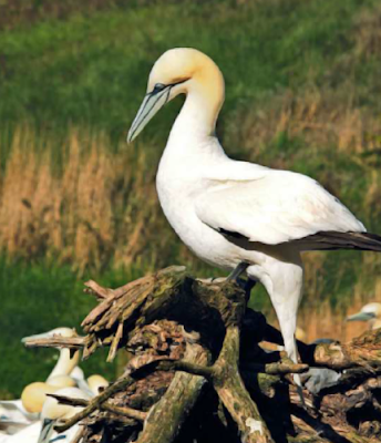 island boasts a conservation park and large bird sanctuary.