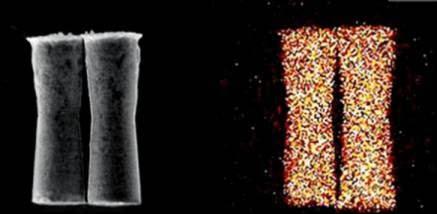 Un nanobot allo stato normale e un nanobot con reazione all'acido dello stomaco del topo