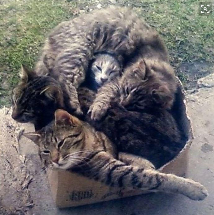 carton et chat 29