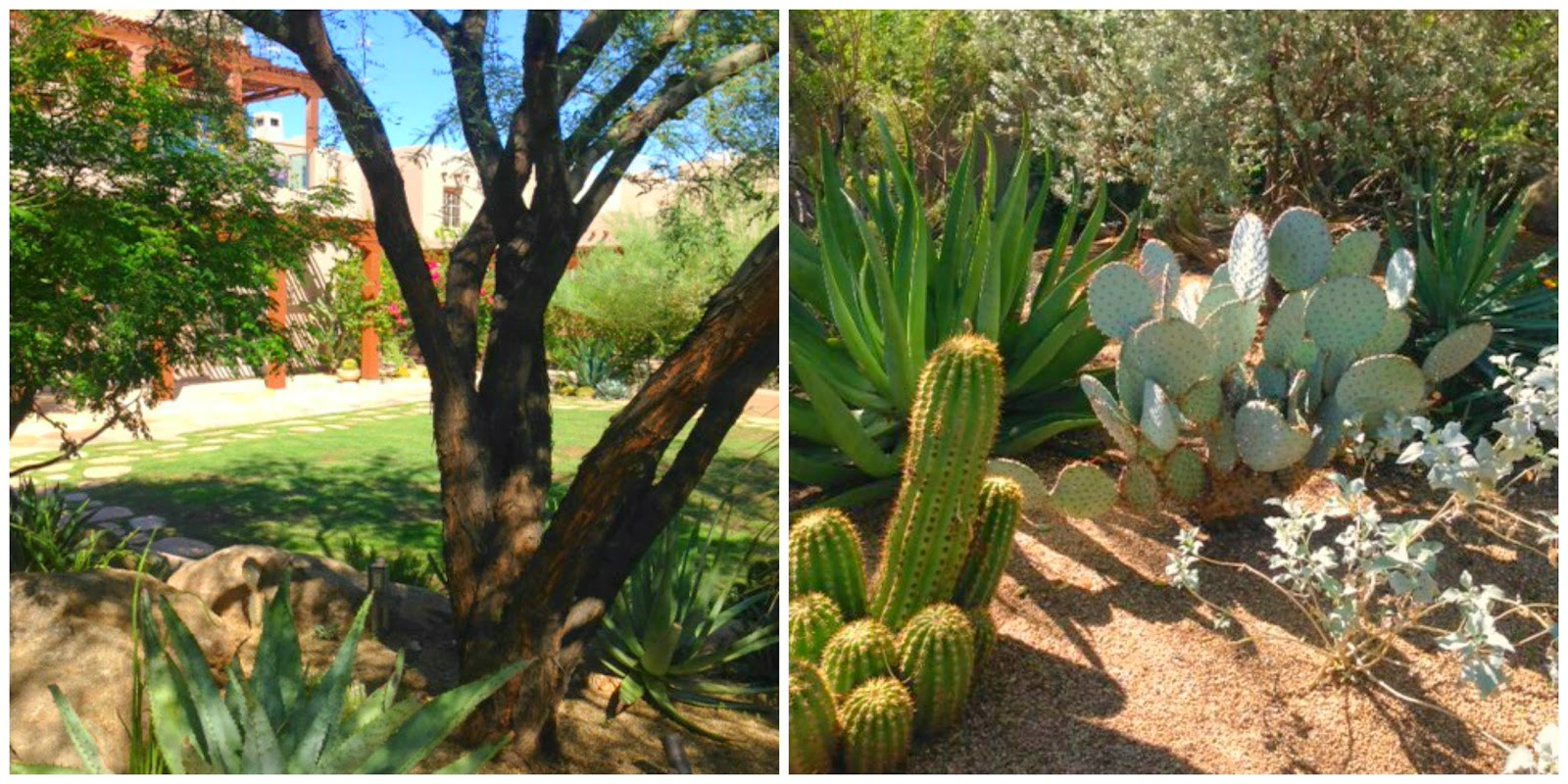 Beautiful cacti and nature at Four Seasons Scottsdale Troon North - Hello Lovely Studio