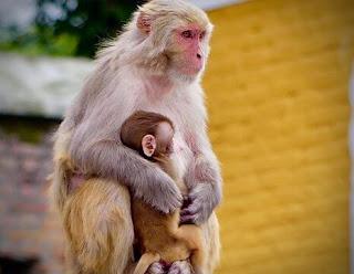 सपने में बंदर देखना | sapne mein bandar dekhna