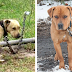 This State Passes Law That Makes It Illegal To Leave Your Dog Outside In Extreme Weather