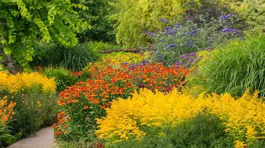 Colores estivales en el jardín. The Hot Garden en RHS Rosemoor