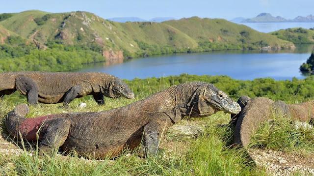 Exotic Komodo Island East Nusa Tenggara
