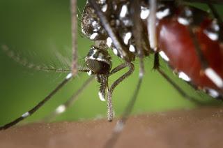 Mosquito-borne sicknesses