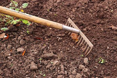rake in a garden plot