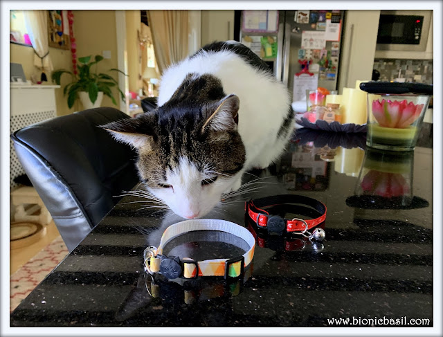 WHAT'S IN THE BOX Cute Cat Collars and Grooming Glove from Zacal @BionicBasil®