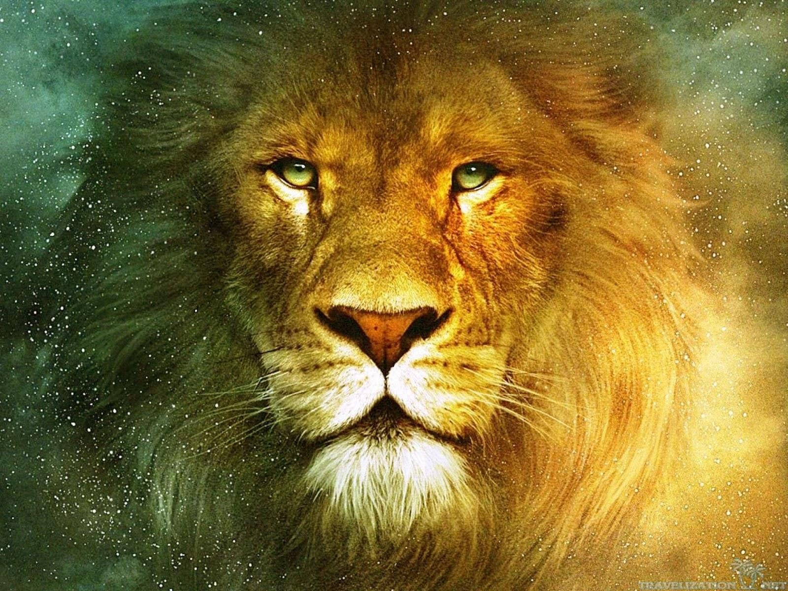 gambar Gambar Singa Lengkap