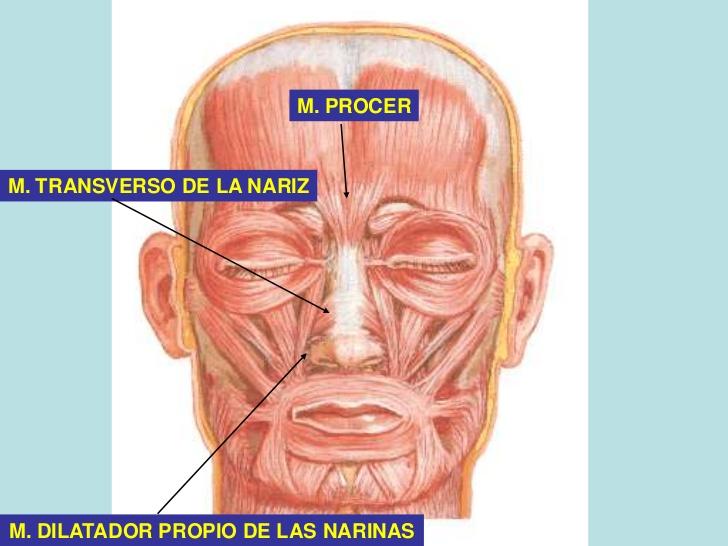 Músculos narinas circundantes - Part 1 - The Last of the Plainsmen ...
