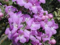 http://1.bp.blogspot.com/-qEkthWKw5v8/UaVfsVFtjDI/AAAAAAAAClY/3liZdUwOANY/s1600/Sage----Texas+Ranger.jpg