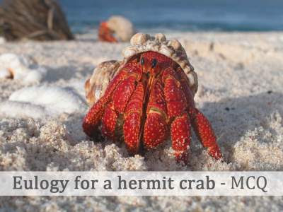 Eulogy for a hermit crab - MCQ