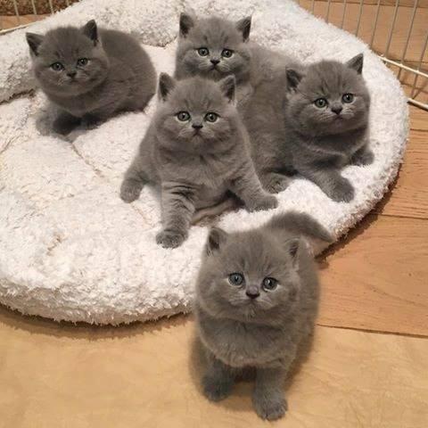 Adorable little kittens