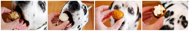 Dalmatian dogs eating homemade pie dog treats made with cookie cups