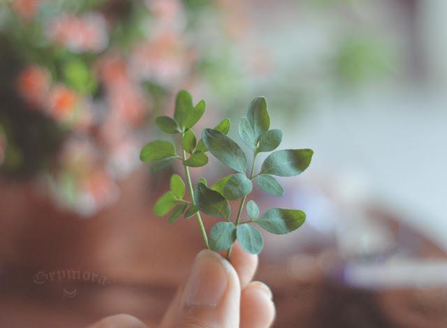 Herbário: Ervas mágicas e suas propriedades