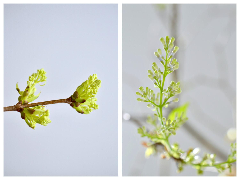 syreeni-hyötäminen-kukkaan