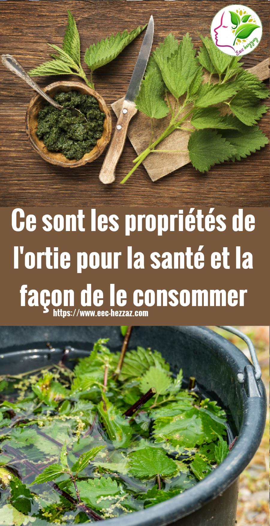 Ce sont les propriétés de l'ortie pour la santé et la façon de le consommer