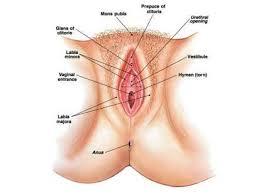 Cara Merapatkan Vagina Agar Lebih Menggigit Seperti Perawan