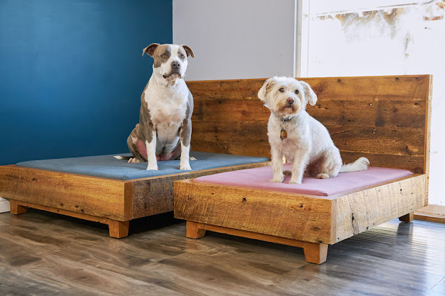 Sustainable Pet Bed Collection