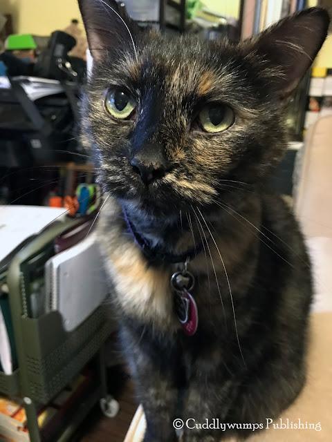 Real Cat Paisley at work_Dec 2017