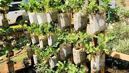 How to make a simple drip irrigation kitchen garden