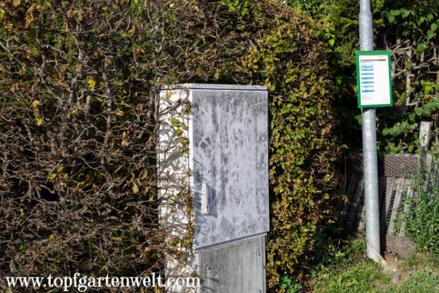 Buchenhecke als Sicht- und Lärmschutz zur Straße und Bushaltestelle - Gartenblog Topfgartenwelt