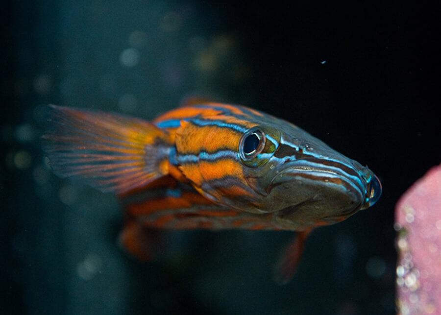 Jenis Ikan Hias Termahal dengan Harga Mencapai Milyaran Rupiah