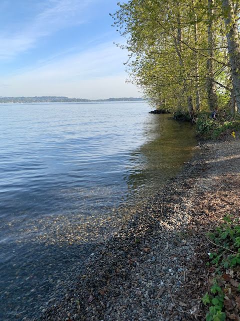 Lake shoreline with trees at water's edge