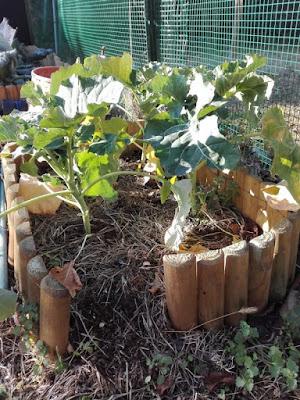 orto-di-gennaio-broccoli