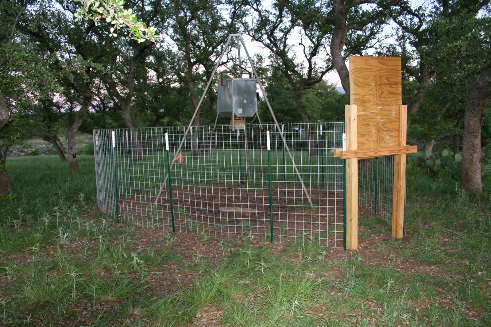 D.I.Y. Game Feeder Corral Trap for Wild Pigs