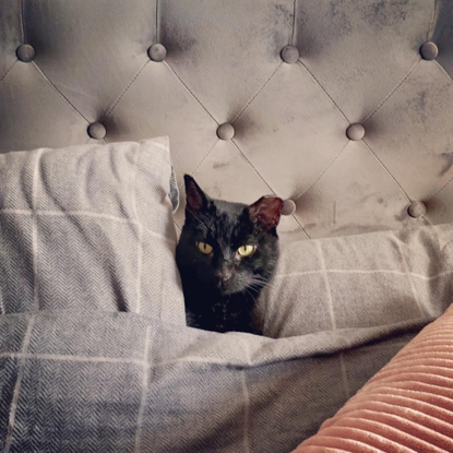 black cat amongst grey bed covers